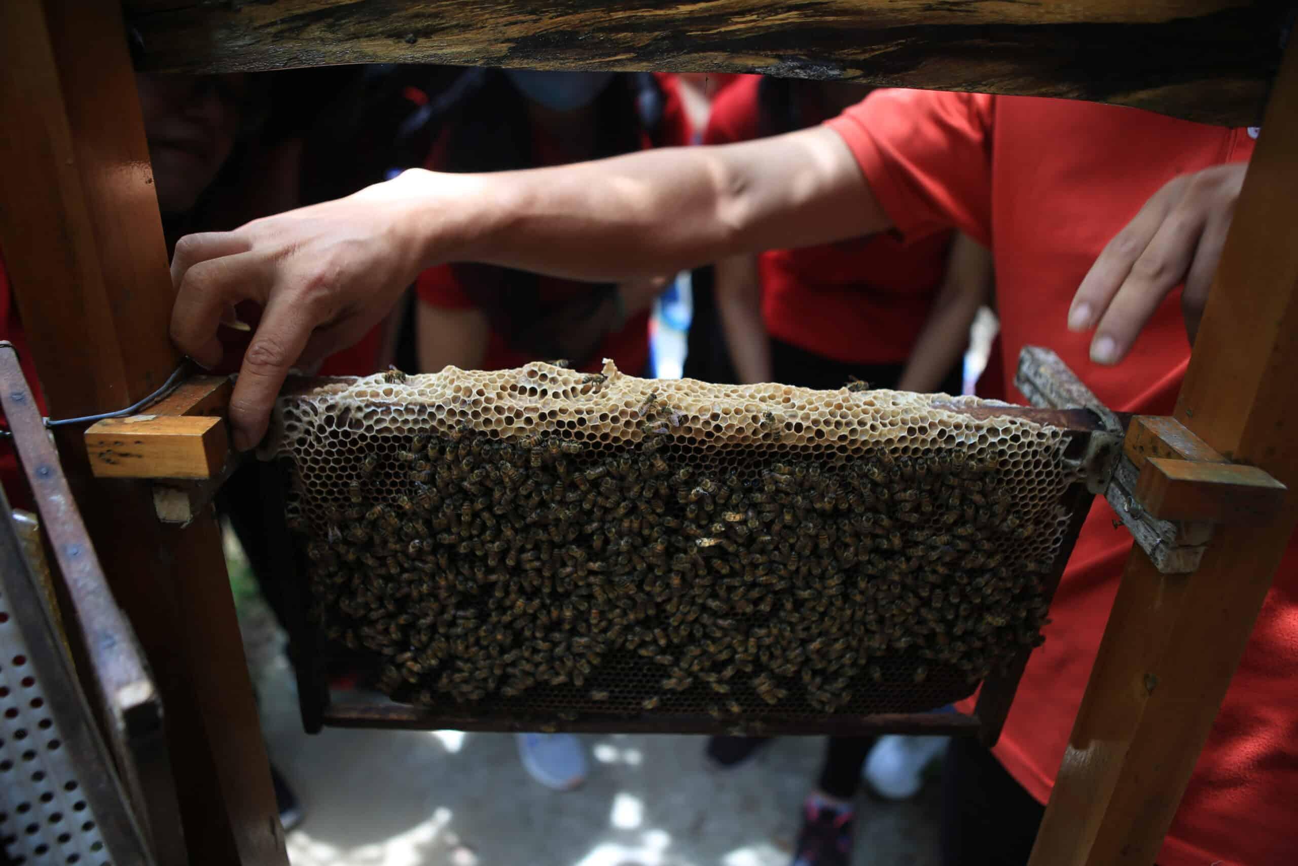 Hướng dẫn cách lấy mật ong
